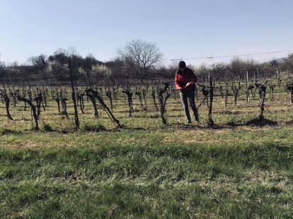 Anna im Weingarten 2
